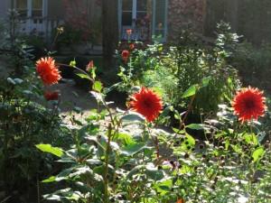 Dahlien im Liebermann-Garten