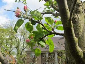 Apfelbaum im Nutzgarten der Liebermann-Villa