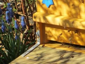 Ein Bienenstock auf dem Wirtschaftsgrundstück des Liebermann-Gartens.