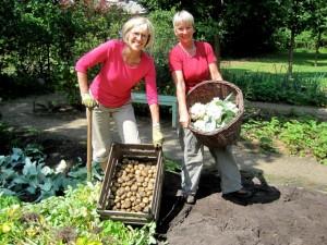 Ehrenamtliche Gärtnerinnen ernten Gemüse im Liebermann-Garten