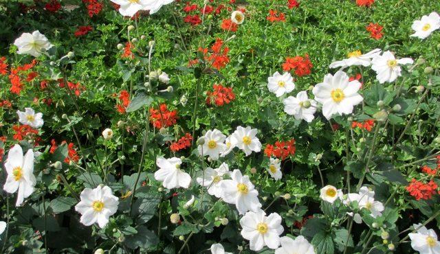 spätsommerlicher Garten